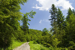 Forest summer road. Forest summer, dirty road in the forest glade Stock Photos