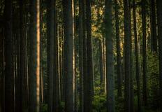 Forest Summer Scenery imagen de archivo