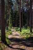 Empty hilly forest road royalty free stock images
