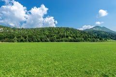 Forest in Summer - Trentino Alto Adige Italy. Forest and green grass in summer. Val di Sella Sella Valley, Borgo Valsugana, Trento, Trentino Alto Adige, Italy royalty free stock photography