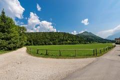 Forest in Summer - Trentino Alto Adige Italy. Forest and green grass in summer. Val di Sella Sella Valley, Borgo Valsugana, Trento, Trentino Alto Adige, Italy stock image