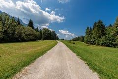 Forest in Summer - Trentino Alto Adige Italy. Forest and green grass in summer. Val di Sella Sella Valley, Borgo Valsugana, Trento, Trentino Alto Adige, Italy royalty free stock photos