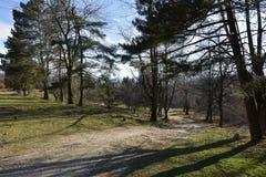 Forest In Summer verde bonito A estrada do campo, trajeto, maneira, pista, caminho em raios de sol de Sunny Day In Spring Forest  Imagem de Stock Royalty Free