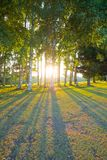 Forest with the sun Royalty Free Stock Photos