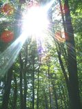 Forest and sun. Green forest and intense sun Royalty Free Stock Image