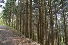 Forest Sun Royaltyfri Bild