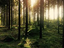 Forest in sun Royalty Free Stock Image