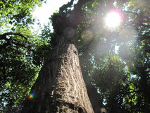Forest Sun Fotos de archivo libres de regalías
