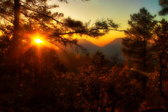 The Forest Sun at Daman Stock Photo