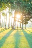 Forest with the sun Royalty Free Stock Photo