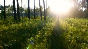 Forest sun green grass stock video footage