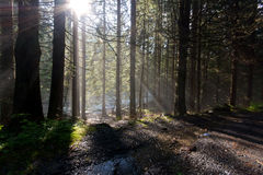 Forest sun light rays Stock Photography