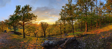 Forest with sun - panorama Royalty Free Stock Photo