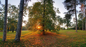 Forest with sun Royalty Free Stock Image