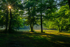 Forest Sun rays Stock Photo