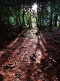 Forest and sun rays. In Killarney national park Stock Image
