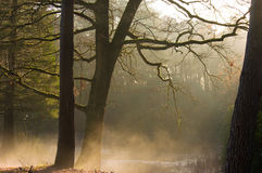 Forest sun rays and low fog. From the nearby water on a autumn morning Royalty Free Stock Images