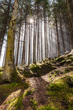 Forest with sun rays Stock Photography