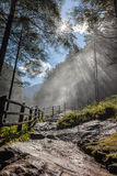 Forest with sun rays Stock Image
