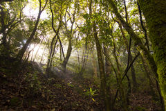 Forest with sun and shadow at sunrise. Royalty Free Stock Photography