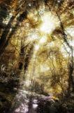 Forest Sun-Strahlen Stockfotografie
