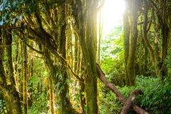 Forest and sun Stock Photography