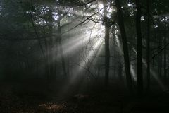 Forest Sunbeams. Atmospheric low light image of early morning sunlight bursting through the tree canopy to reach the forest floor. Taken on a misty morning Stock Images