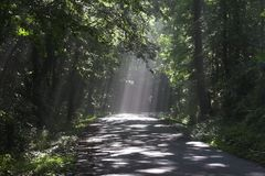Forest & sunbeams Stock Photography