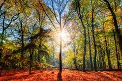Forest Sunburst foto de archivo