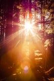 Forest Sunburst Royalty Free Stock Photos