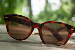 Forest Sunglasses royalty free stock images