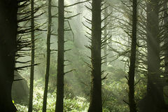 Forest Sunlight Stock Photo