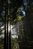 Forest and Sunlight Stock Photography