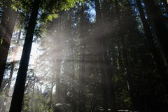 Forest and Sunlight Stock Image