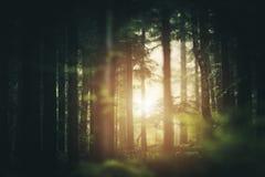 Forest Sunlight escénico foto de archivo