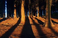 Forest with sunlight and shadows Royalty Free Stock Image