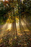 Forest sunlight and shadows. Morning Forest sunlight and shadows Royalty Free Stock Photos