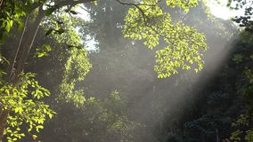 Forest with sunlight shining. Forest with the sunlight shining stock footage