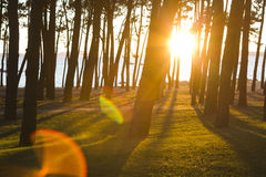 Forest with sunlight Royalty Free Stock Photo