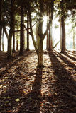 Forest sunlight Royalty Free Stock Images