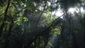 Forest with sunlight. Tree in forest with sunlight shining stock video footage