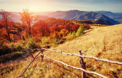 Forest in sunny afternoon while autumn season. Carpathian Stock Photography