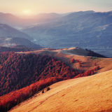 Forest in sunny afternoon while autumn season. Carpathian Stock Images