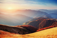 Forest in sunny afternoon while autumn season. Carpathian Stock Image