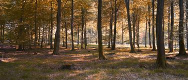 Forest in sunny autumn Stock Image