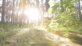 Forest and sunny day morning Royalty Free Stock Images