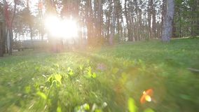 Forest and sunny day morning Royalty Free Stock Photos