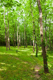 Forest at sunny summer day. Stock Photography