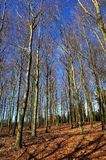 Forest in sunny winter day Royalty Free Stock Photos