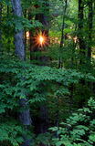 Forest Sunrise Stock Images
